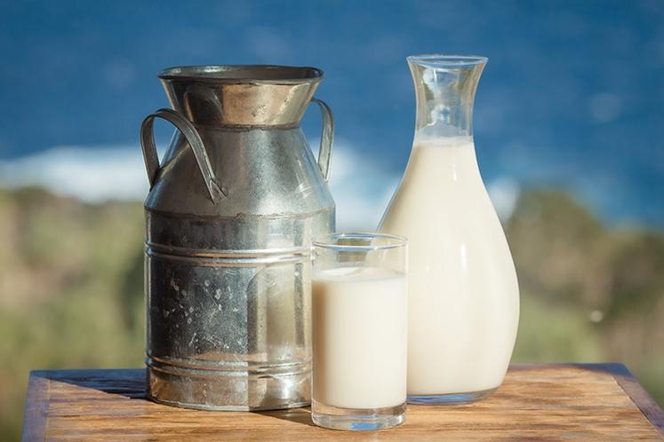 【朝食】新鮮な八丈島ジャージー牛乳