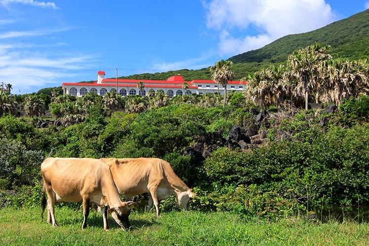 ホテル前には放牧牧場「ゆーゆー牧場」