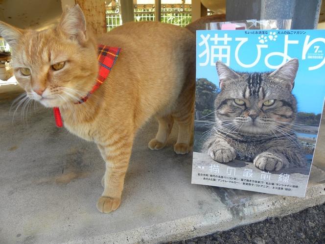 猫日和7月号に当館のたまとハナがのりました!!
