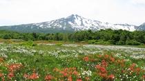 *【桑ノ木台湿原】鳥海山を望み、山野草の豊かな色あいを楽しみながら行う湿原トレッキング!