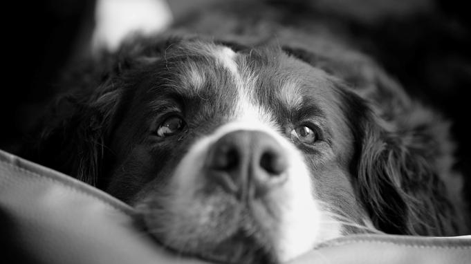 ≪一人旅応援キャンペーン中!≫【ひとり旅×愛犬×育む時間】ふたりで作る幸せの空間はここにある。