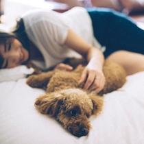 ペット同伴可能な客室。ワンちゃんとお寛ぎください