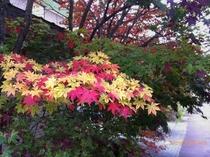 (秋)紅葉