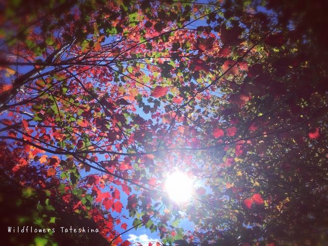 (秋)紅葉と陽射し
