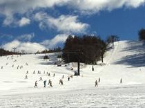 (冬)白樺国際スキー場