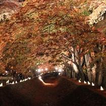 ≪もみじ回廊≫徒歩約5分。紅葉を愉しみながらご散策ください♪