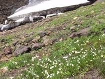 夏の栗駒山登山プラン