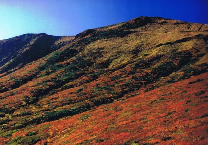 日本一と呼ばれる栗駒山紅葉