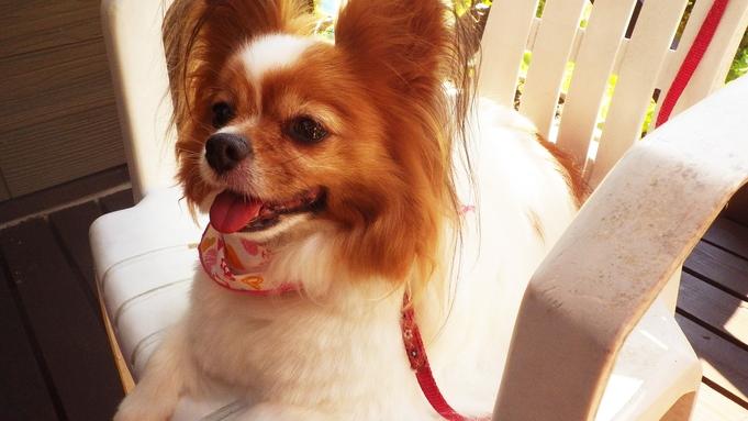 ■ペットプラン■愛犬と一緒に龍神温泉で宿泊♪<お部屋食>【S037】