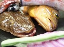 地魚「コチとヨネズ」