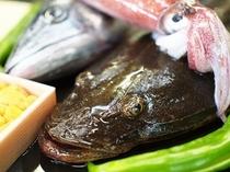 夏の地魚「コチ」