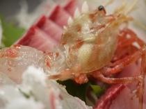 底引き網漁「獲れたての地元エビ」