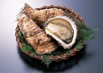 大きくて美味しい夏のカキ「岩牡蠣」
