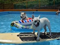 ワンちゃん専用プールです。