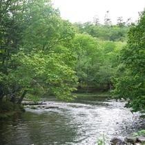豊かな川の中にはたくさんの魚が泳いでいます