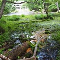 川の畔の湿地帯