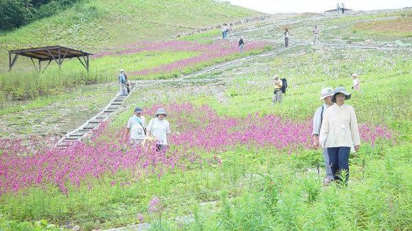【白馬五竜高山植物園】アルプス平に広がる高山植物を気軽に散策しながら楽しめます。