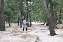 わんちゃんと広大な松林をお散歩