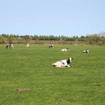 *周辺景色/中標津は日本でも有数の酪農地帯。のどかな風景に心癒されます。