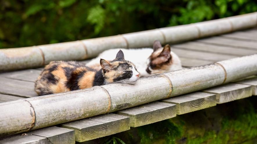 *【猫】街歩きしていたら、ゴロゴロ気持ちよさそうな猫ちゃんを見つけました。