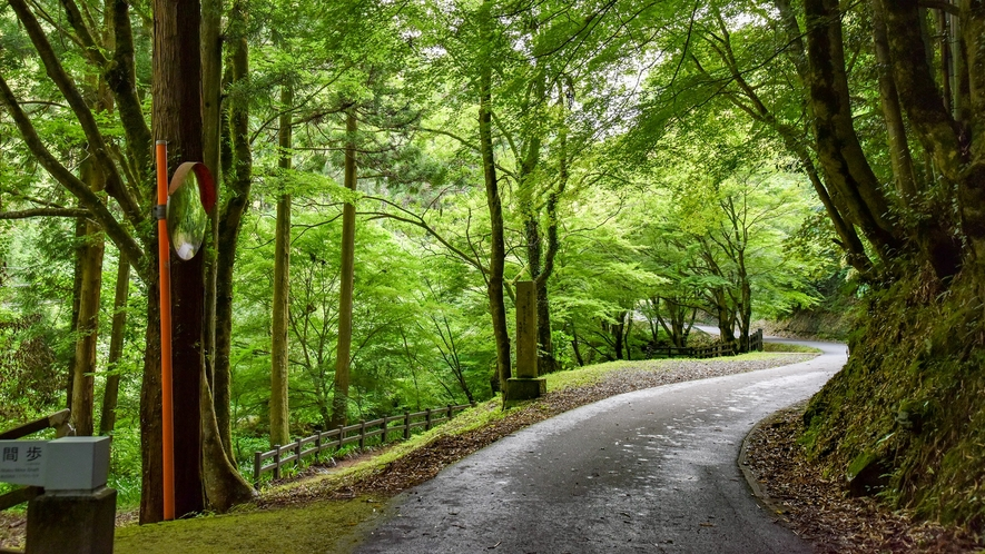 *【龍源寺間歩までの道のり】マイナスイオンたっぷり!日ごろの疲れが癒される道のり。