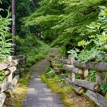*【龍源寺間歩】出口。自然豊かな道をお楽しみください。
