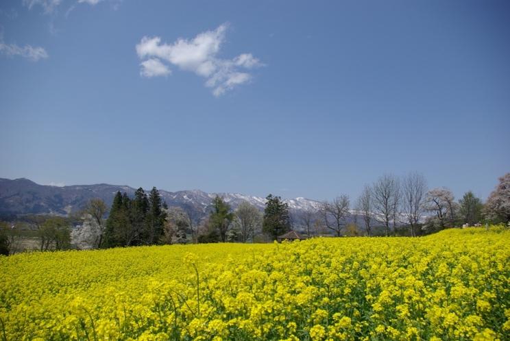 《飯山》『いいやま菜の花まつり』風景写真③