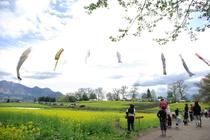《飯山》『いいやま菜の花まつり』風景写真④