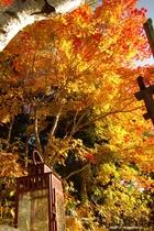 《秋季》庭の紅葉