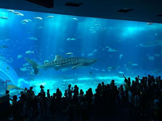 美ら海水族館へは車で25分