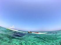 海の中は楽園