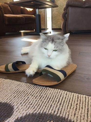 クールな猫のチッチも時々出てきます。