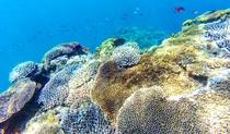 珊瑚と魚たち