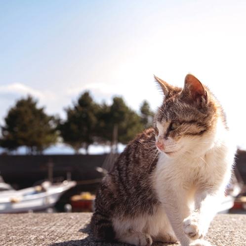 【天草の風景】猫島で人気の湯島