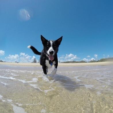 【ペットも一緒♪】1棟まるごと貸切☆海を臨むコテージでペットと暮らすように過ごす休日