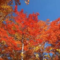 奥志賀渓谷の紅葉