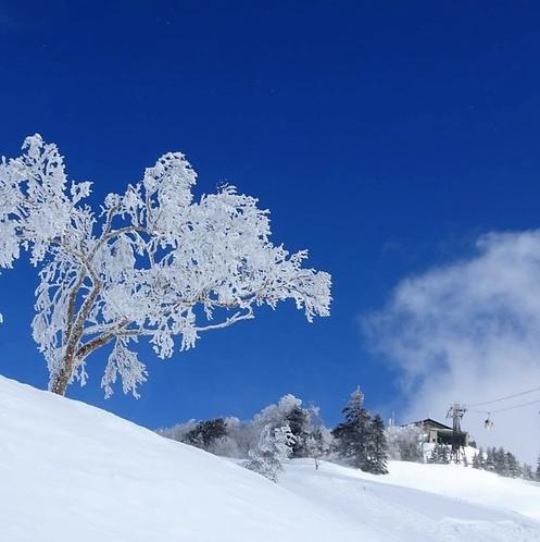 冬の奥志賀