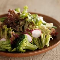 【おすすめメニュー】ガーデングリーンサラダ