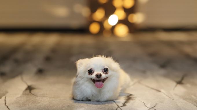 【スタンダードプラン】愛犬と過ごす ご・遊庭 ステイ