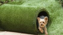 施設イメージ(愛犬とお庭)