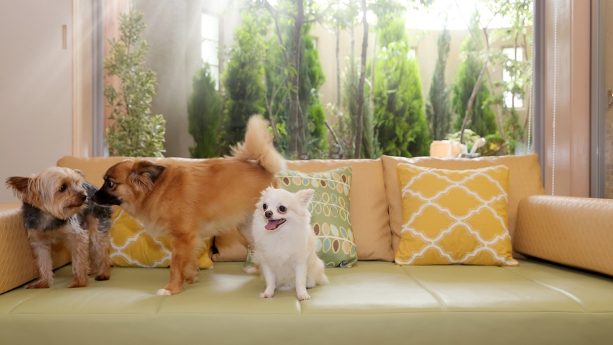 施設イメージ(愛犬と室内)