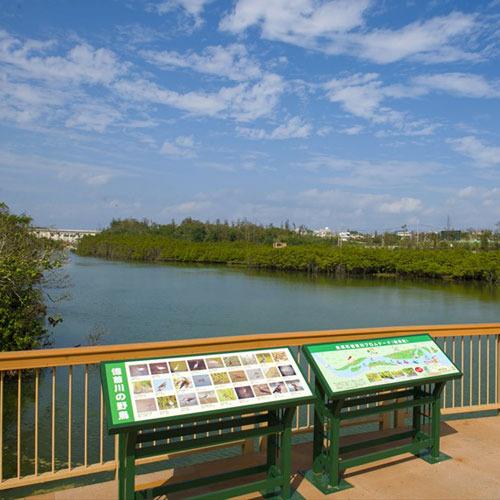 億首川から流域のマングローブを望む風景 【車で約15分】