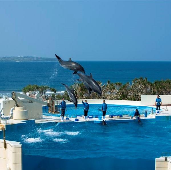 沖縄海洋博記念公園「イルカショー」