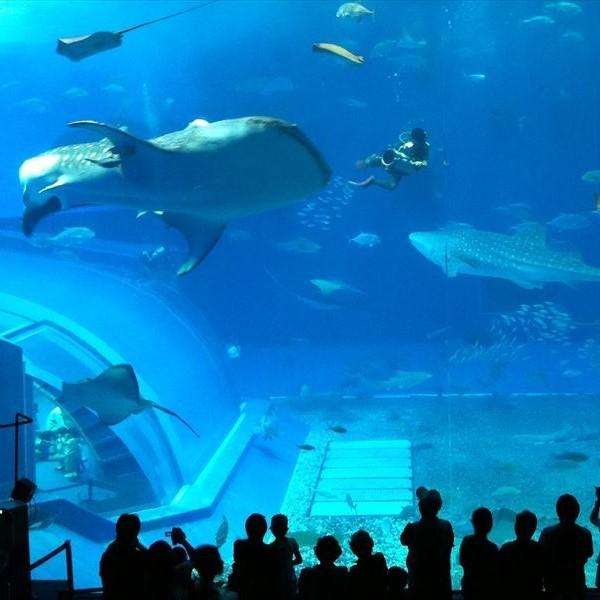 沖縄海洋博公園「美ら海水族館」