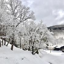 *近隣風景/今年も冬がやってきました♪山里の雪景色を見ながら散歩するのはいかがでしょうか。