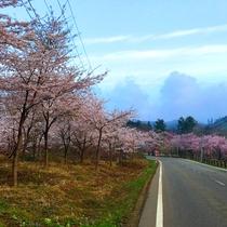 *【景観】季節の移ろいを感じながらのドライブは、絶景そのもの!