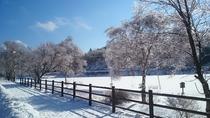冬の白樺湖