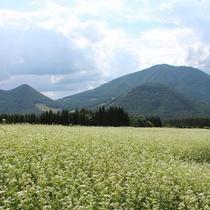 北志賀高原そば畑