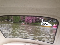 【周辺案内】上野公園貸しボート