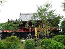 【周辺案内】寛永寺「月の松」